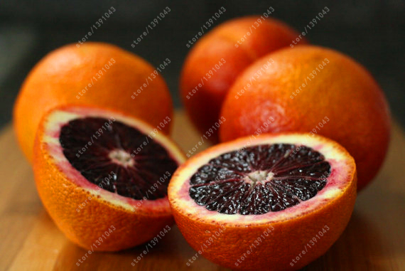 20 orange seeds blood orange mandarin tree NO-GMO rare fruit tree seeds for home garden planting