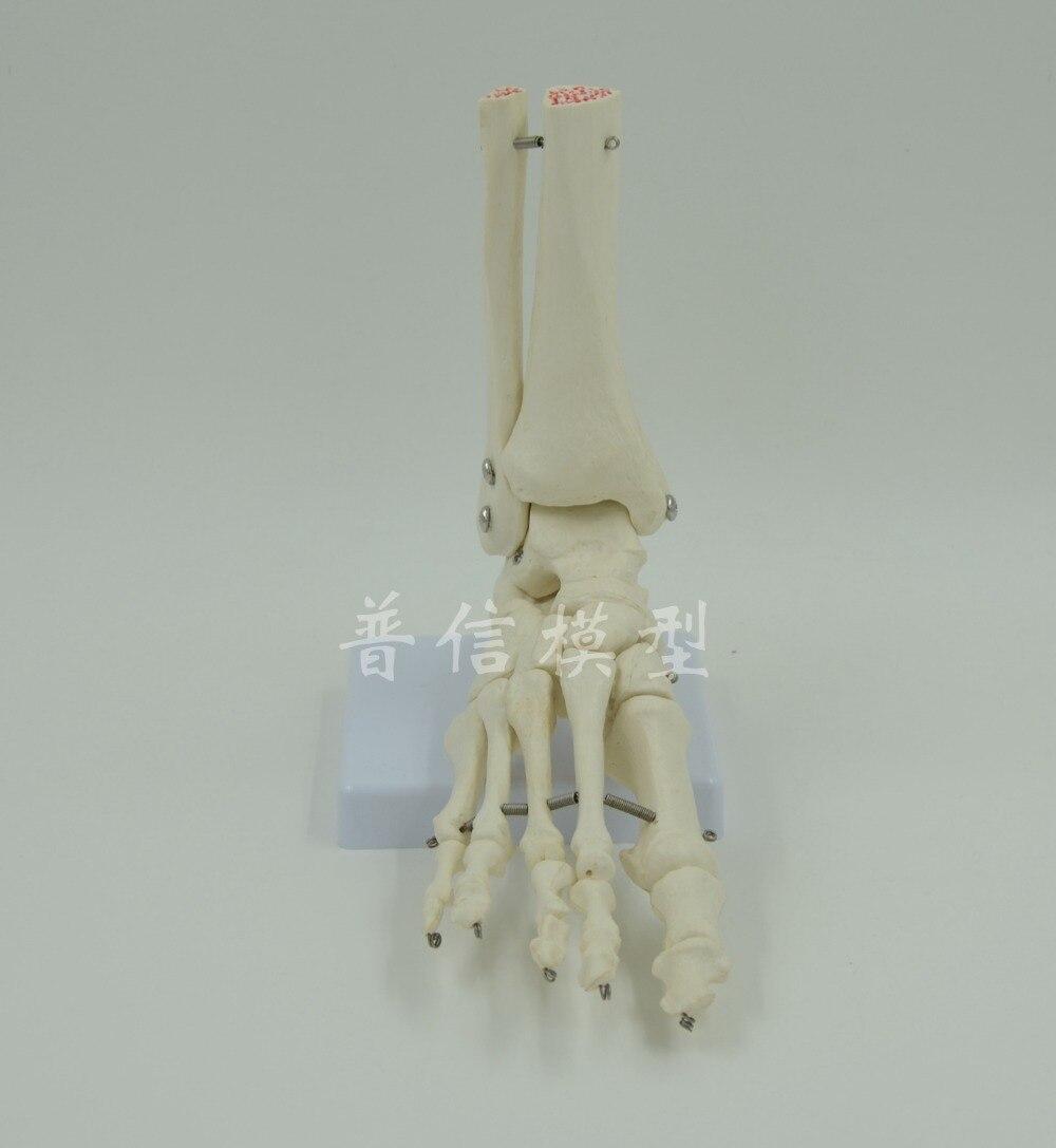 Compra pie humano online al por mayor de China, Mayoristas de pie ...