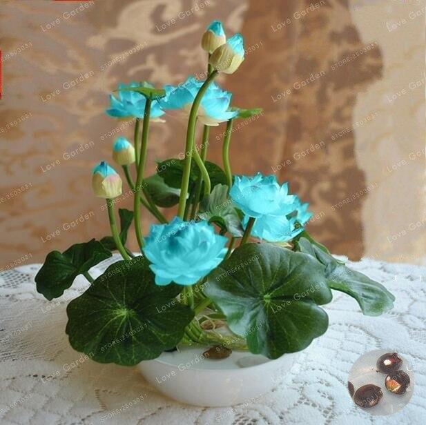 Venta caliente 10 unids/pack de lotus Bonsai plantas hidropónicas plantas acuáticas flor maceta de Bonsai loto lirio de agua planta Bonsai Garden