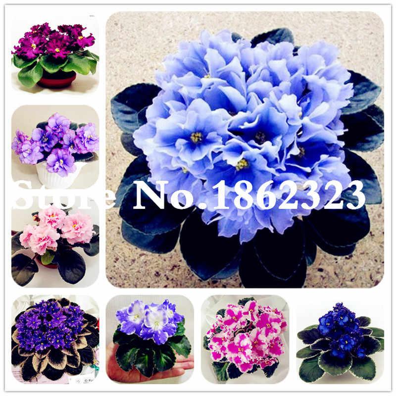 50 шт. фиолетовое красивое растение бонсай цветочное растение Африканский красный фиолетовый мини небесно-голубой фиолетовый бонсай редкие растения для дома