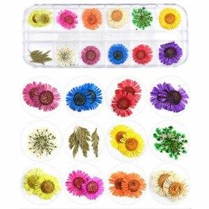 Image 5 - 12 adet/kutu 3D gerçek kurutulmuş çiçek Nail Art dekorasyon UV jel lehçe manikür lehçe gerçek korunmuş çiçek yaprak karışık kuru çiçek ipuçları