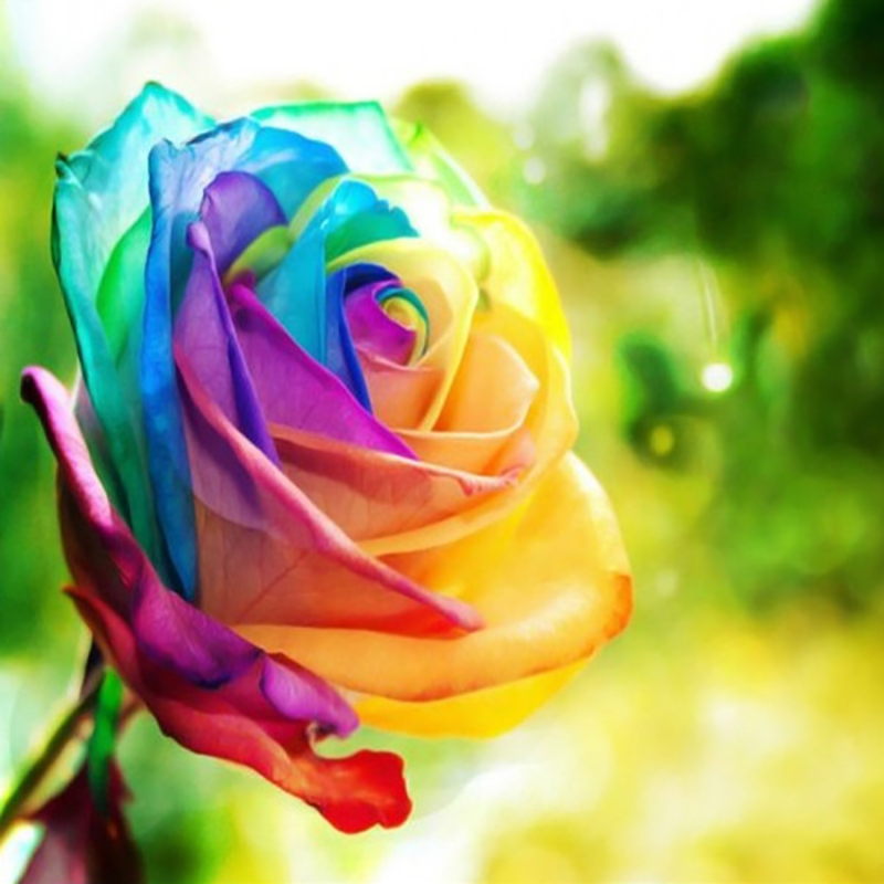 Buy flower pots planters 12 kinds of 50 for Where to buy rainbow roses