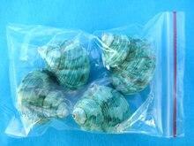 Conjunto de parafuso verde natural concha,, 4 unidades, caranguejo, rolo, sallei, substituição de peixe, decoração de aquário