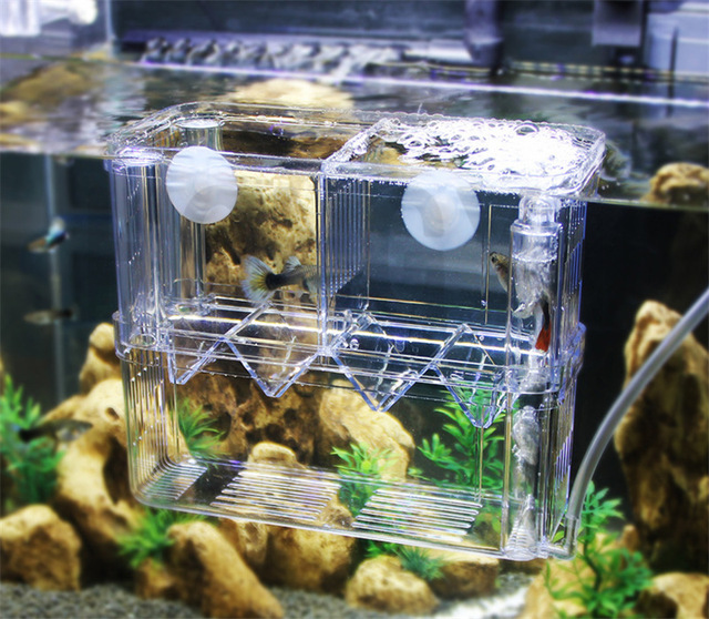 US $16 1 9% OFF|Aliexpress com : Buy Breeding hatching isolation box  delivery room for tropical fish juvenile betta from Reliable Aquariums &  Tanks