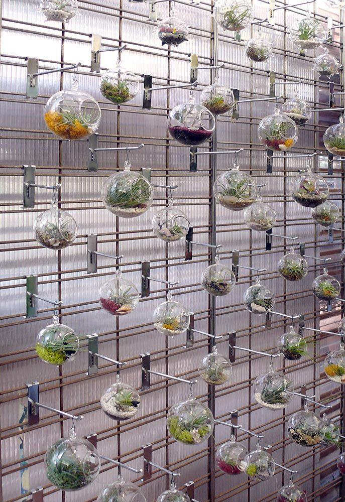 tienda online unidslote que cuelga de vidrio planta terrariums suculentas jardineras interiores cristal macetas decoracin del hogar adornos de la