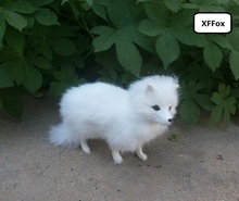cute real life white fox model plastic&furs simulation standing doll gift about 16x12cm xf1714