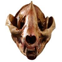 Detachable Simulation Animal Panda Head Skull Resin Crafts Specimen Medical Teaching Model Halloween Home Decoration