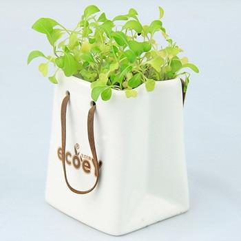 ECOEY zakka creative cultivation of high-quality factory direct spot small pot of green Creative Desktop