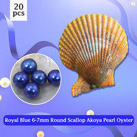 20pcs 6 7mm Round Scallop Akoya Oysters,Superior Quality Royal Blue Pearl to Make Bracelets, Ring, Necklace Free Shipping PJW283