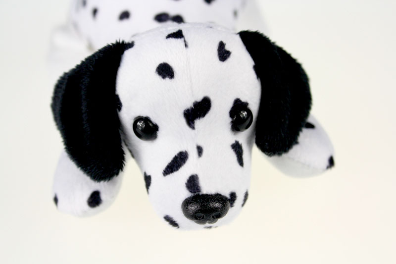 dalmatian dog_6