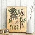 Гарри Фан художественная иллюстрация милый Мандраг растительный Декор холст картина на стену картина, Классический постер кино декор для д...