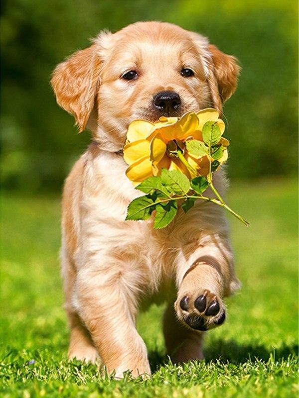 Открытки для, прикольные открытки с животными и цветами