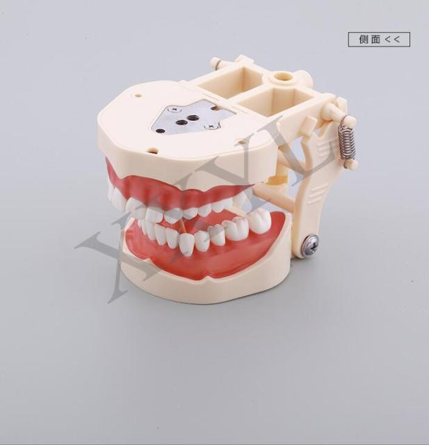 Human Dental lab laboratory equipment ps4 denture teeth anatomy ...