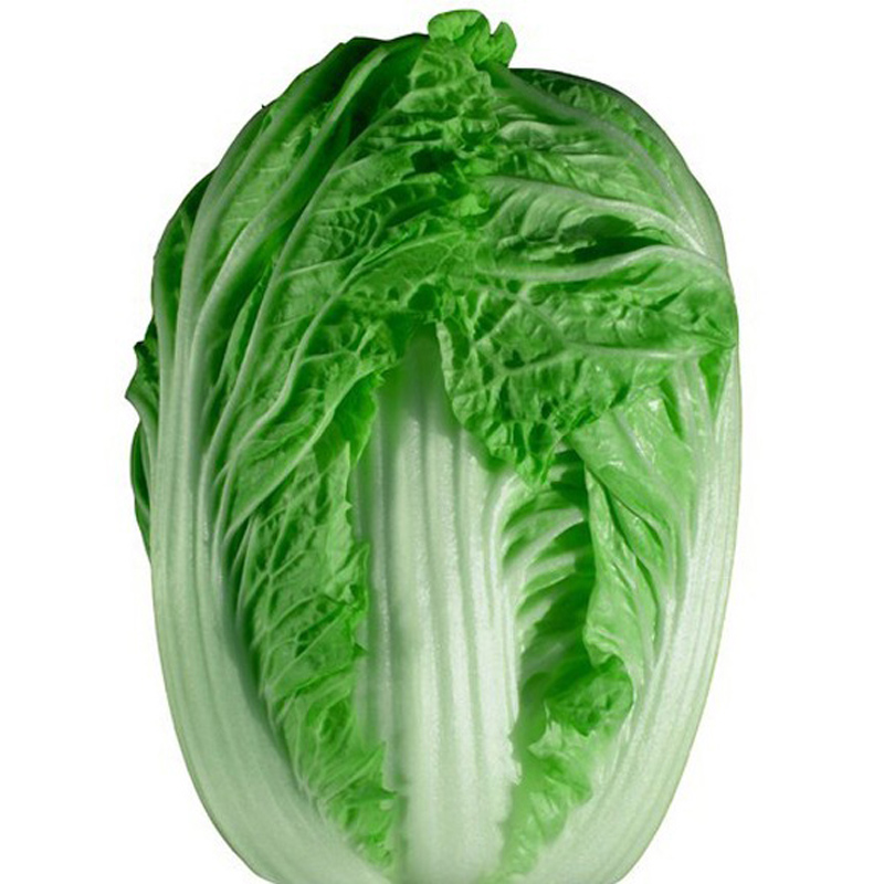 Hybrid F1 Vegetable seeds Spring King Cabbage seeds imported cannonball shape cabbage Seeds 10 grams/bag