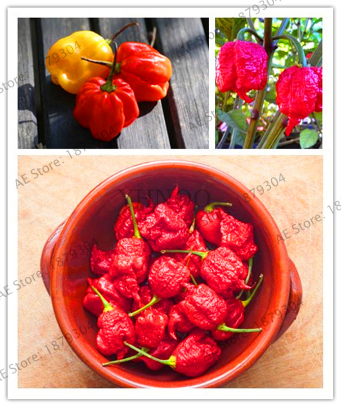 """Red /""""Carolina Reaper/"""" Pepper 200 Pcs Seeds hot chilli Buy 2 Get 1 Extra Free"""