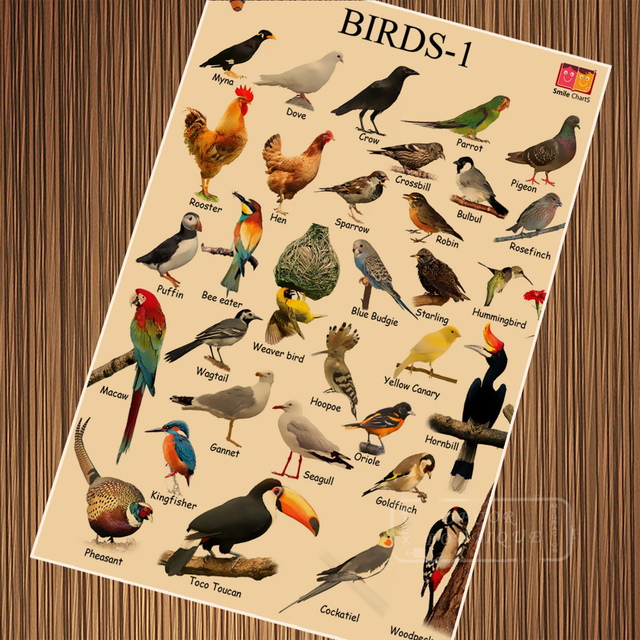 Common Backyard Bird Species Child Education Vintage Retro Poster Canvas  Painting DIY Wall Paper Posters Home - Common Backyard Bird Species Child Education Vintage Retro Poster