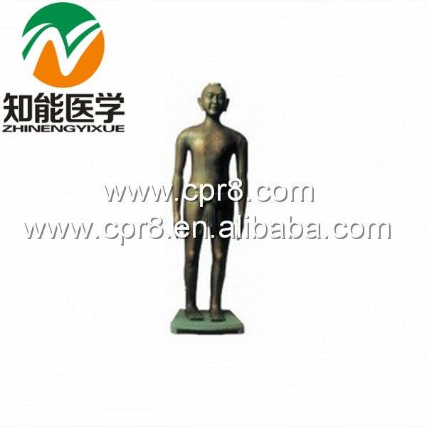 BIX-Y1001 Archaize Acupuncture Copper Manikin(Antique Bronze) G038 bix y1002 human acupuncture model bronze  178cm wbw332