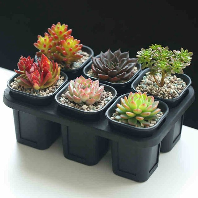 Mkono Set of 6 Nursery Pots Seedling Planters Seed Tray for Garden Plants Seeds Succulents Use