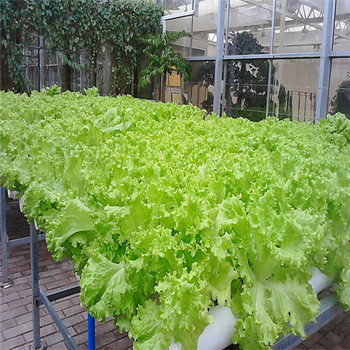 2019 АКЦИЯ 100 шт. наружные растения легко выращиваемые салат бонсай мини сад растительные растения Diy завод бесплатная доставка