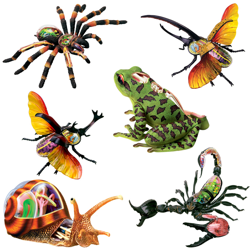 1Pcs Anime 4D Vison MASTER Animal Anatomy Model Frog Scorpion Snail Spider Action Figures Adults Kids