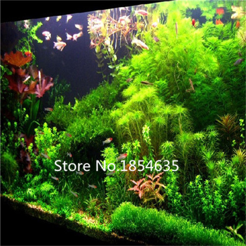 Garden Plant  500pcs aquarium grass seeds (mix) water aquatic grass seeds (15 kinds) home hydroponics plant seeds Bonsai Seed
