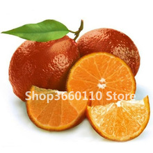 fruit plant Bonsai Lemon Tree bonsai High survival Rate Fruit For Home Gatden Backyard Free Shipping