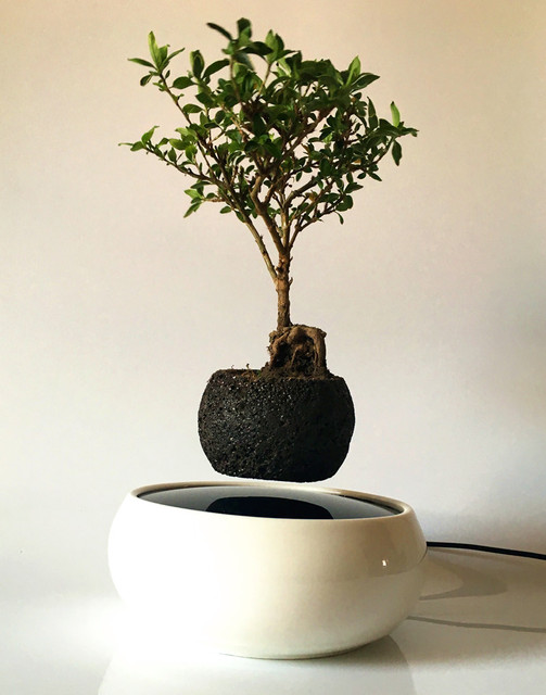 Buy 2016 japanese levitating potted for Floating plant pots