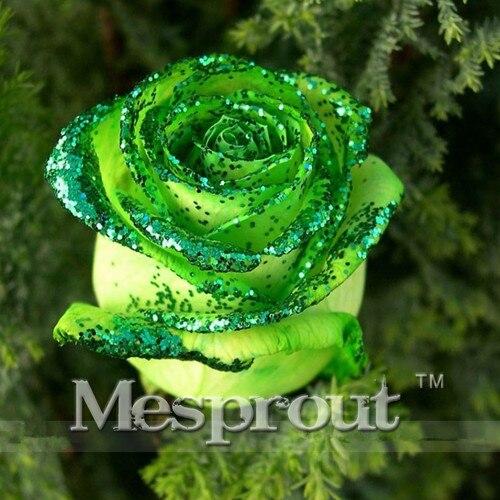 Время предела! 100 шт. Китайский зеленый вырос Lover Золотой Зеленый Роуз Семена Сильный ароматный Сад розы мне #007