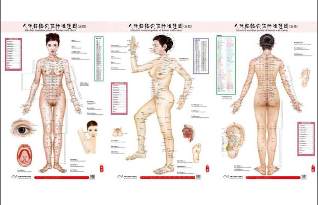 Massage & Relaxation Male Human Meridian Points Wallmap Acupuncture Massage Point Map A Full Human Flipchart Hd 3 Chinese And English Beauty & Health