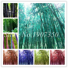 50 Pcs/pack Fresh Giant Moso Bamboo Bonsai Plant High Germination Rate Beautiful For Diy Home Garden Household Items Mix Colors