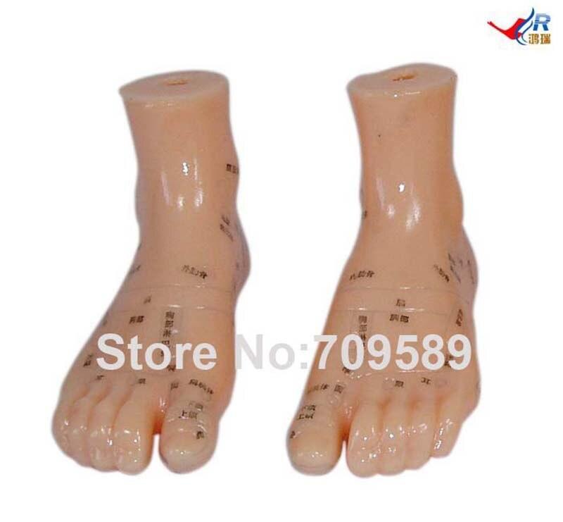 Modell Anatomie Professionelle Medizinische Fußmassage 12 CM in ...