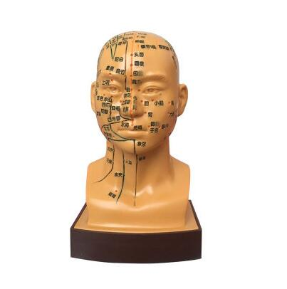 19CM Gold Male pvc teaching medicine human acupuncture acupoint head mannequin model facial acupressure display stand 1pc A337