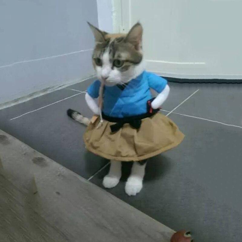 Прикольные костюмы для котов гифки