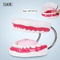 TDOU Seis Vezes de Ampliação de Boca Cheia Modelo Modelo de Ensino Dente Dental a Alta-grade Apresentação Frete Grátis