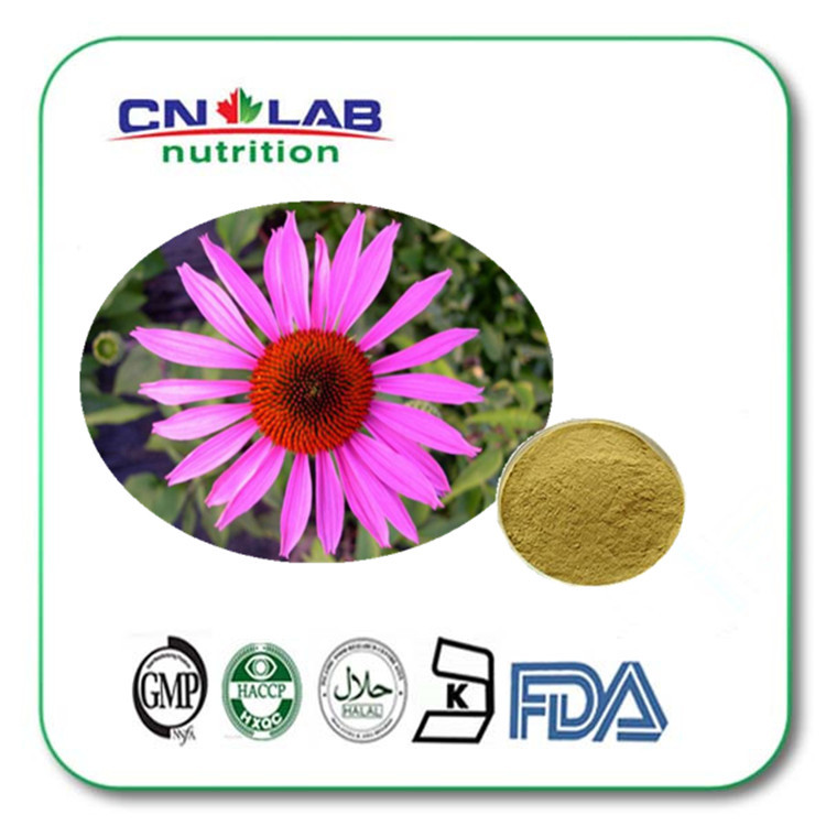 200g/bag Hot Selling 100% Pure Echinacea Extract 2% Chicory Acid for Strengthening Resistance free shipping Echinacea Powder hot product nettle leaf extract 2% silicic acid