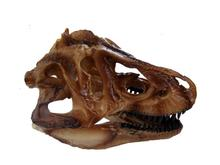 wholesale 14cm brown resin skull split tyrannosaurus head mannequin, reference skull model, artistic bust,landscaping M01012 human skull model 1 1 skull model resin skull model art skull model