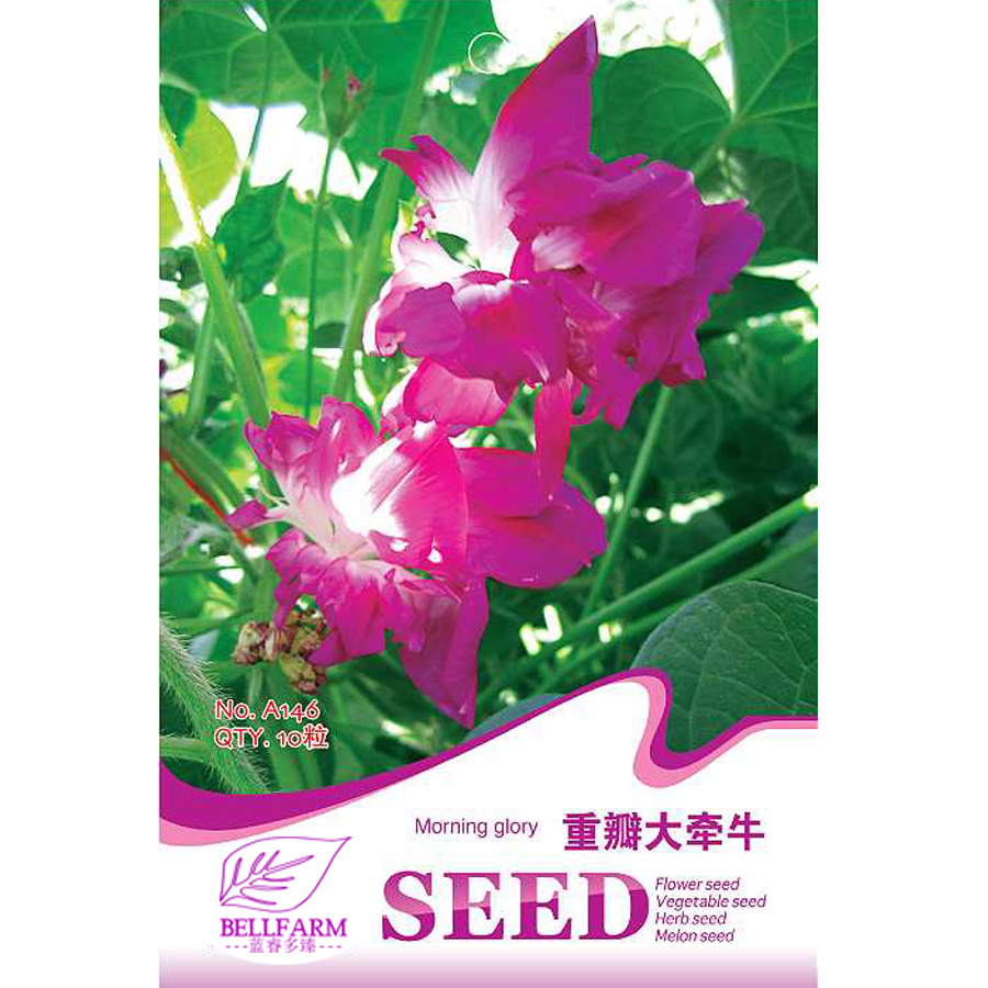 Bellfarm Morning Glory Purple White Double Petals Bonsai Flowers