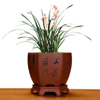 Purple Sand Classical Flower Pot Ceramic Orchid Bonsai Pot Simple Personality Fleshy Green Plant ZiSha Flower Pot With Tray