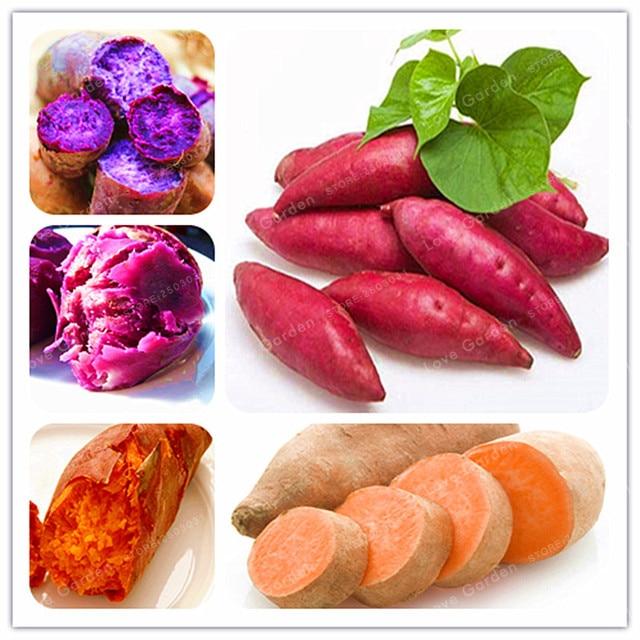 20 قطعة/الحقيبة البطاطا زراعة الخضروات بونساي الطازجة الغذاء الفاكهة و الخضار وازم الحديقة بونساي النبات للمنزل حديقة