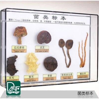 Sette tipi di Campioni di piante fungo Esemplare di un fungo scienza strumenti didattici Per Bambini regaliSette tipi di Campioni di piante fungo Esemplare di un fungo scienza strumenti didattici Per Bambini regali
