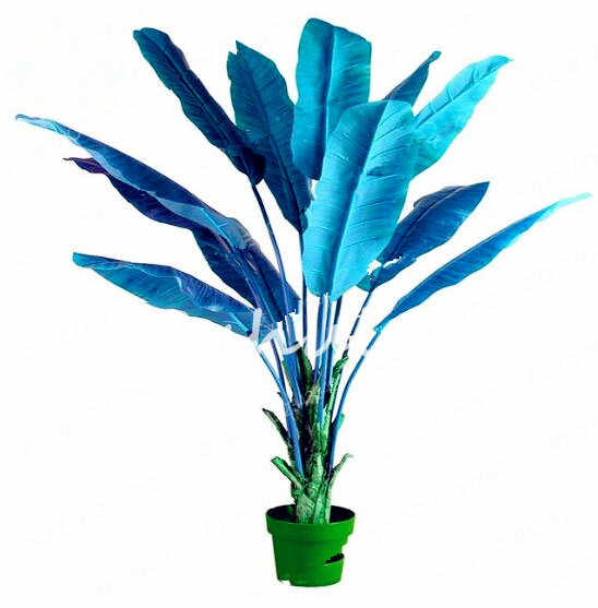 100 Pcs Colorido Bonsai Canna Indica, beleza Perene Tropical Ao Ar Livre Grandes Folhas Flor Para Casa Jardim Planta Em Vaso Purificar O Ar
