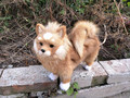 big simulation dog toy polyethylene & furs cute Pomeranian doll gift about 28x25cm 221