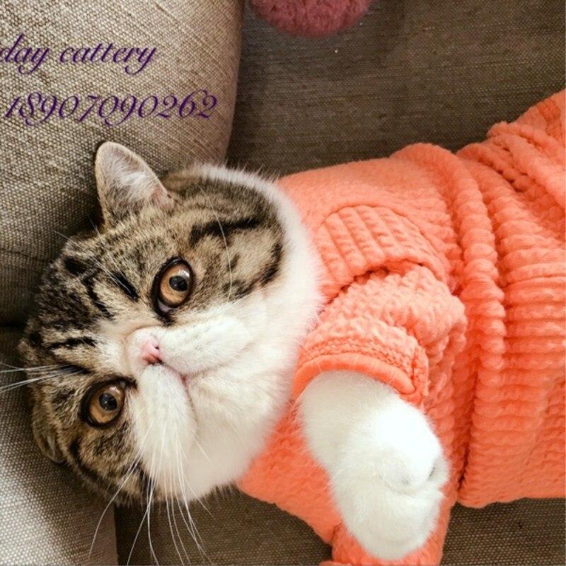 [MPK Cat Sweaters] New Design SWD Cat Sweater, Dog Sweater, Pet Sweater,  Pet Winter Wear
