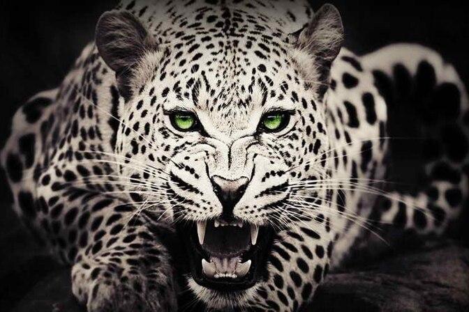 Digital Leopard Art Wallpapers: HD Printed Modern Art Wall Angry Leopard Animal Green Eyes