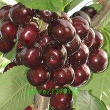 10pcs/bag Hot Sale Dark Red Cherry seeds Balcony Bonsai fruit seeds Organic cherry fruit seeds pot plants for home garden