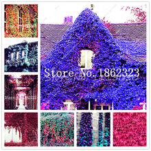 100Pcs IVY plants Outdoor Creepers Green Boston Ivy bonsai Drop Shipping Parthenocissus Tricuspidata plant For Home Garden Decor(China)