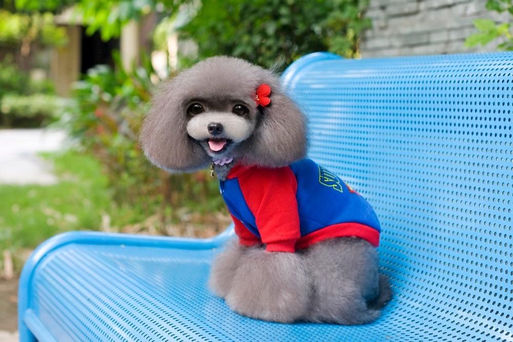 S / M / L / XL / 2XL / 3XL / 4XL / 5XL Goedkope merk superman kleding - Producten voor huisdieren - Foto 3