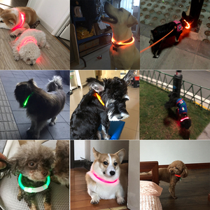 Image 2 - USB Charging Pet Dog Collar Rechargeable LED Tube Flashing Night Dog Collars Luminous Safety Puppy Cat Collar With Battery