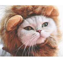 [MPK 10 Years] Lion Mane Cat Costume, Headwear For Cats, Newest High Quality Cat Toy, Turn Your Kitty Into A Lion