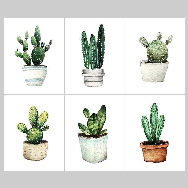 Cactus Plants Sale